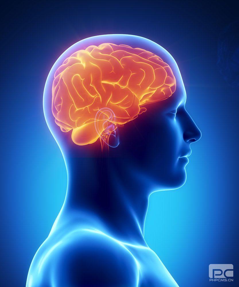 """在思维方式转变时,人类大脑能够快速地提取和分析新信息。麻省理工学院(MIT)神经学科学家的一项新研究结果表明,这些转瞬即逝的大脑状态改变可以通过同步大脑不同区域的脑电波被记录下来。   研究人员发现,猴子学习如何分类由圆点组成的不同图案时,大脑中的前额叶皮质和纹状体会同步它们的脑电波,从而形成新的通信回路。   麻省理工学院皮考尔学院神经生物学教授, 此次研究论文的第一作者Earl Miller,在6月12日出版的《神经元》(Neuron) 杂志上发表论文:""""研究发现了前额叶皮质和纹状体"""